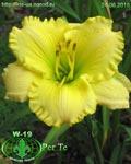 "Заказ садовых растений на "" Сотке"".( Тюльпаны) Image017"